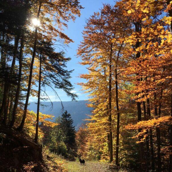 Bénédicte Coenegracht - herfst in de bergen
