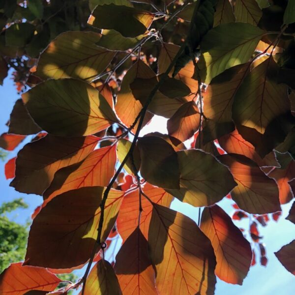 Bénédicte Coenegracht - herfstbladeren
