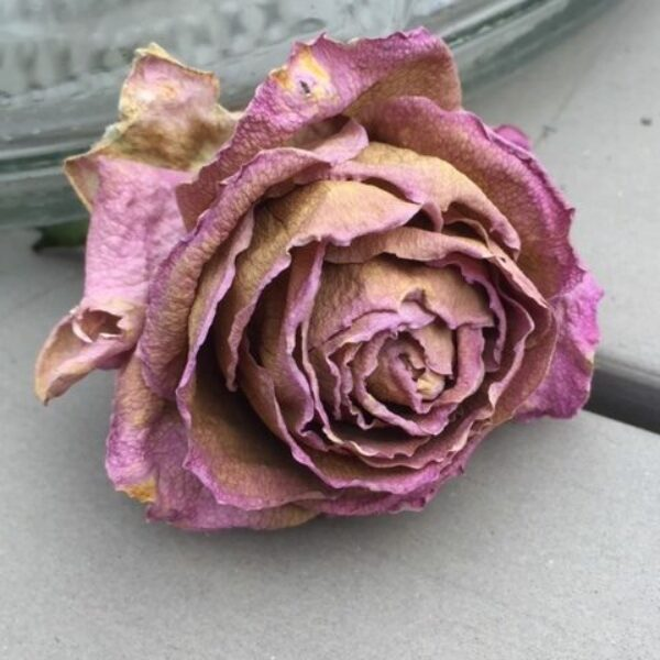 Bea Dankelman - roos