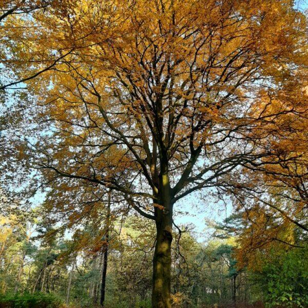 Esther Otten - herfstboom in bos