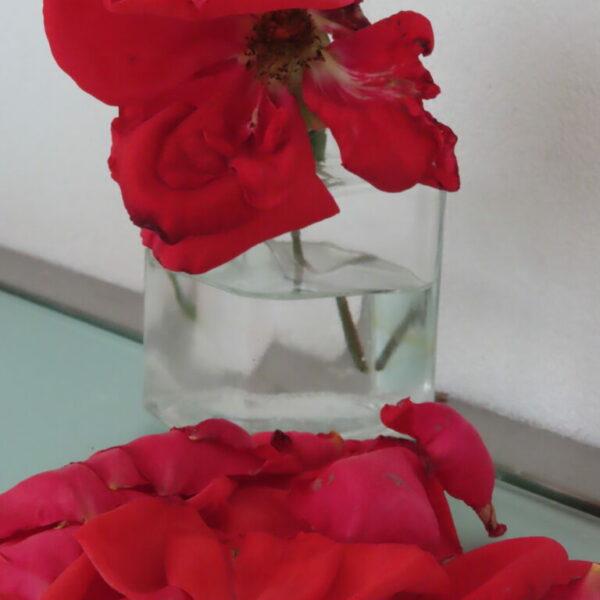 Jolanda Timmermans - Joosten - vallende bloemblaadjes