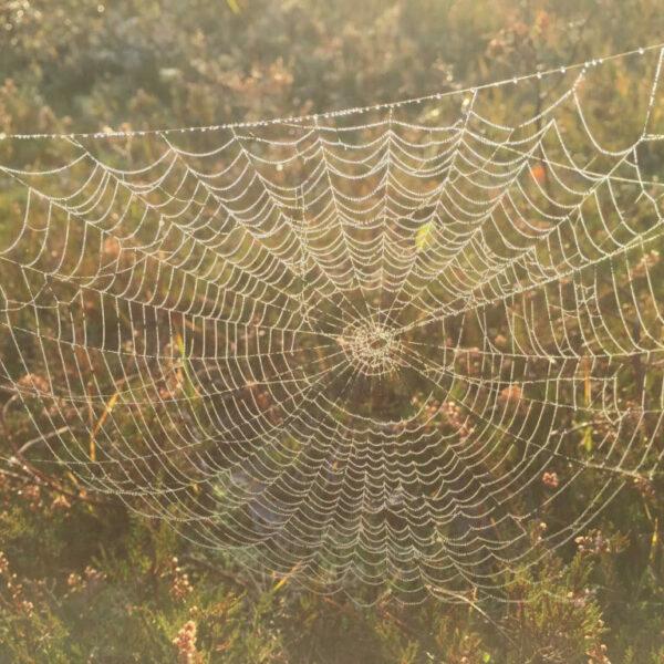 Saskia Vullers - spinneweb in zonlicht
