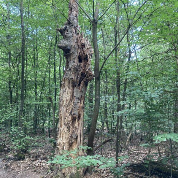Lucie Peijnenburg - dode boom in bos